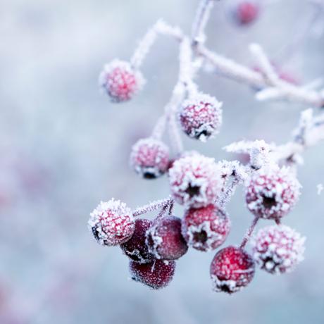 Mindfulvandring Vinter